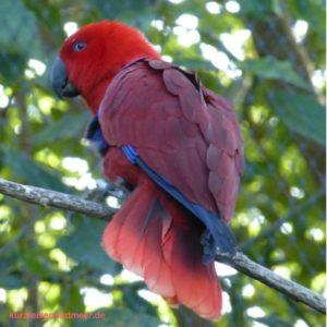 Das Bild zeigt einhen Papagei. Es wurde im Loro Parque aufgenommen. (Reiseplanung 2017)