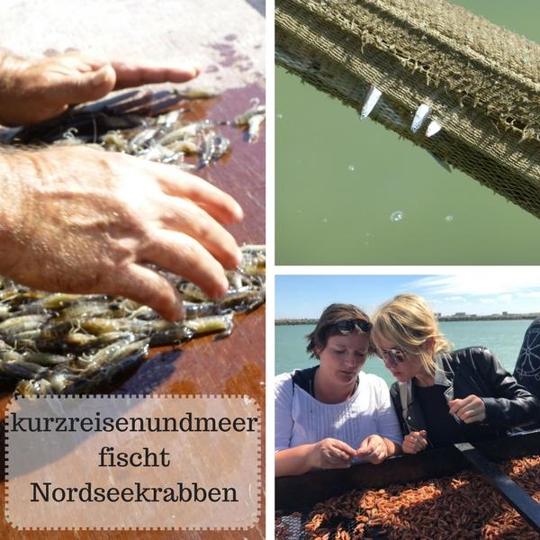 Das Titelbild zeigt eine Collage von Bilder aus dem Blogbeitrag kurzreisenundmeer fischt Nordseekrabben