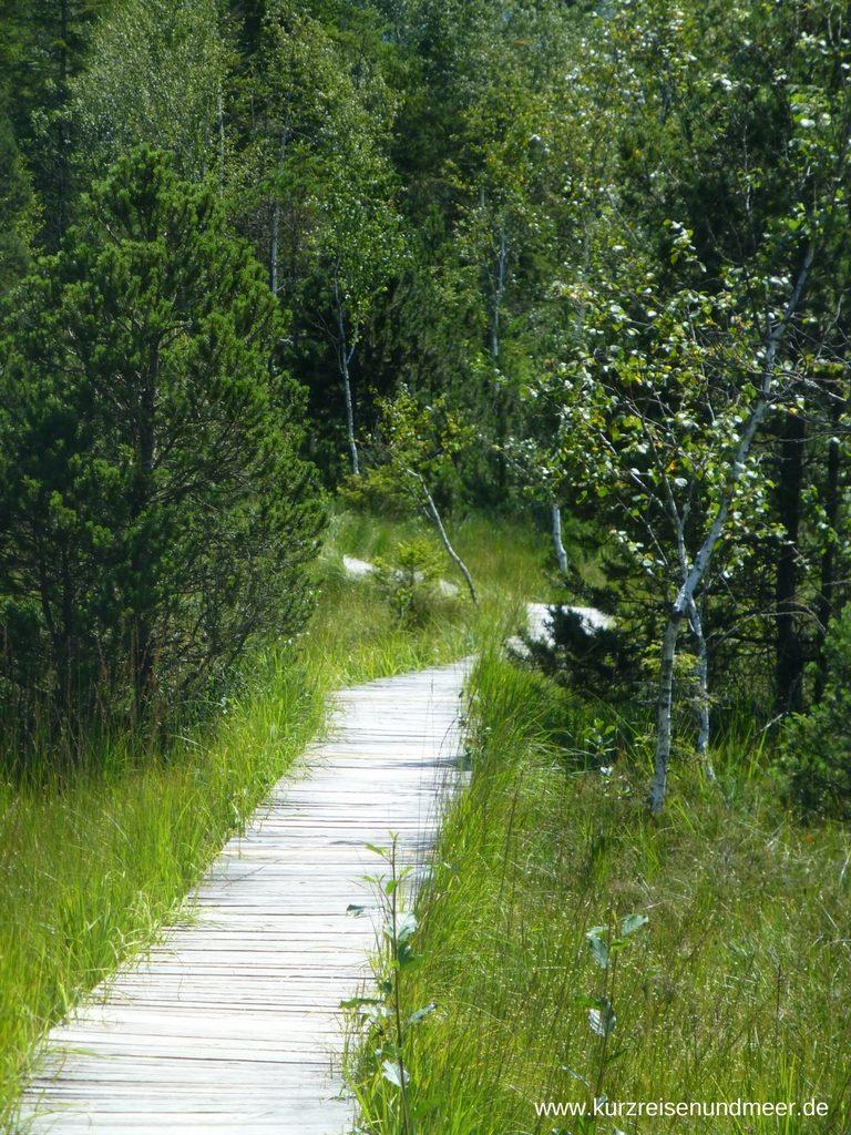 Das Highlight der Wanderung - Bohlenweg im Langen Filz