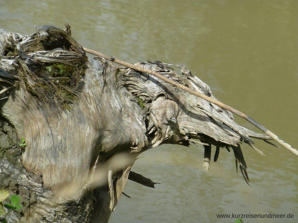 Holzstamm, der aussieht wie ein Kamelkopf