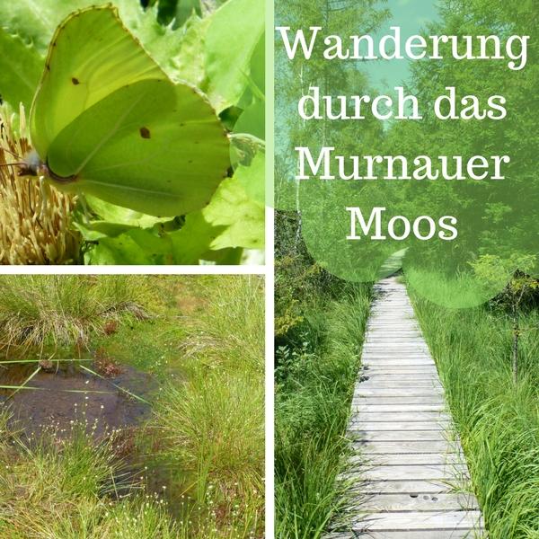 Das Bild zeigt eine Colleage von Bildern aus dem Murnauer Moos