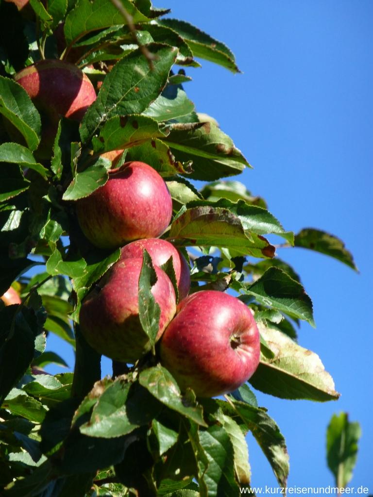 Bild von Äpfeln, die am Wegesrand wachsen