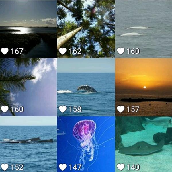 Welches Bild aus dem Monat November gefällt Dir am besten?