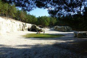 Ein Tag im Harz mit Burgruine, Sandhöhlen und Mühle