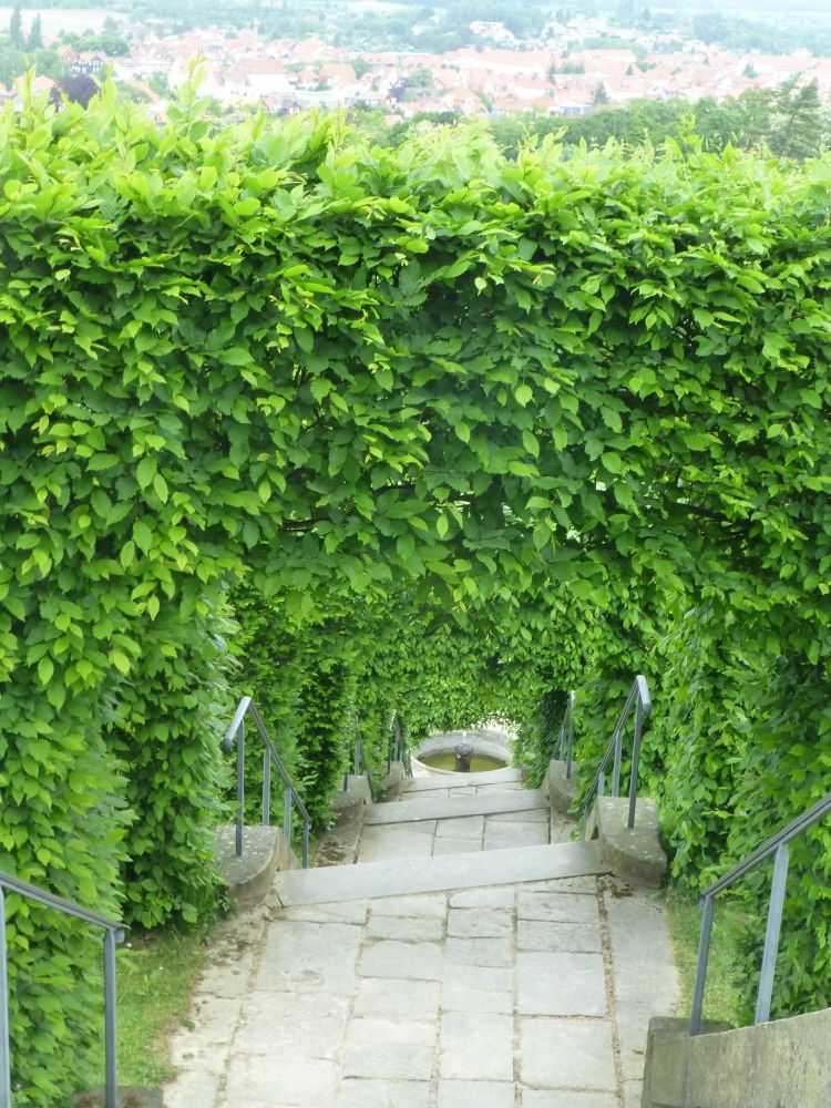 Treppe im Berggarten der Barocken Gärten Blankenburg