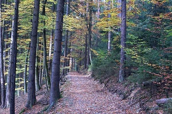 Du wanderst gerne, willst aber auf den Genuss entlang des Weges nicht verzichten? Dann bist Du im Frankenwald und auf den 32 FrankenwaldSteigla genau richtig.